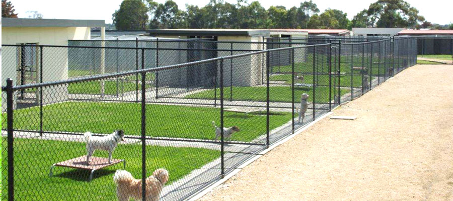 Boarding kennels melbourne dog kennels bayside pet centre for Building a dog kennel business